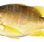 comprare-pesce-fresco-online