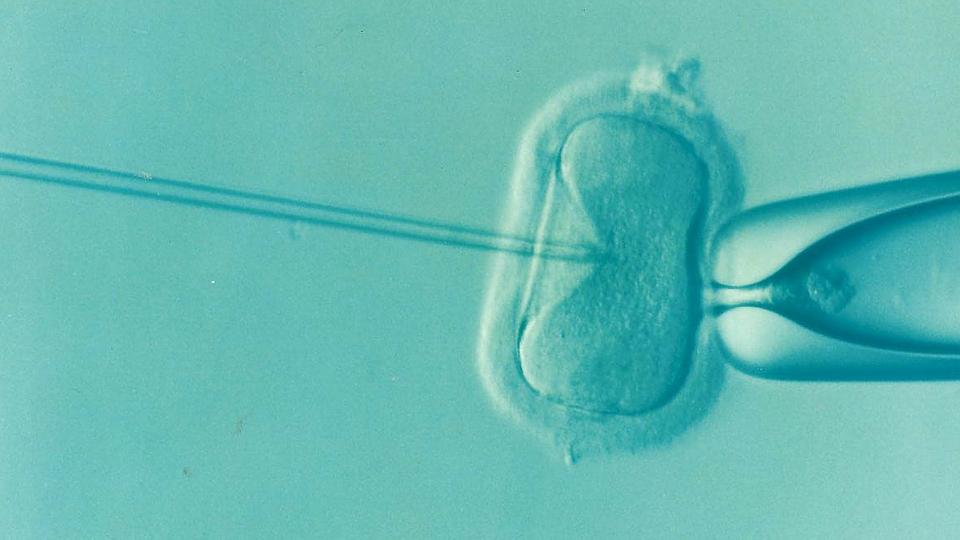 Test fai da te fertilità maschile