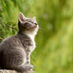 Linguaggio gatto