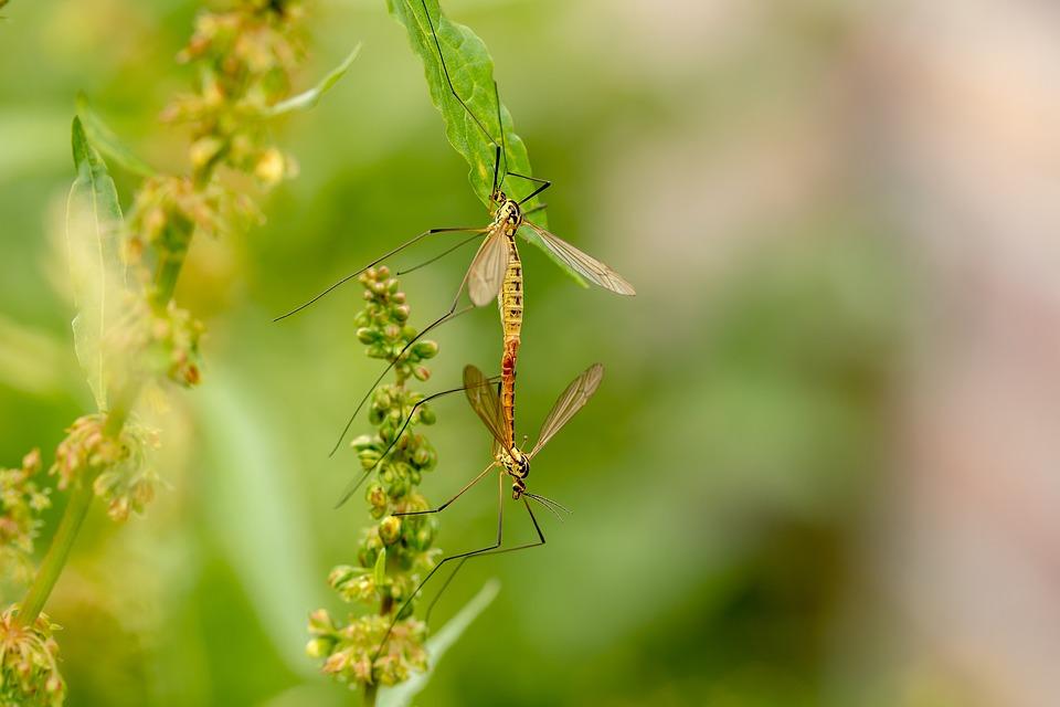 Puntura zanzare pericolosa