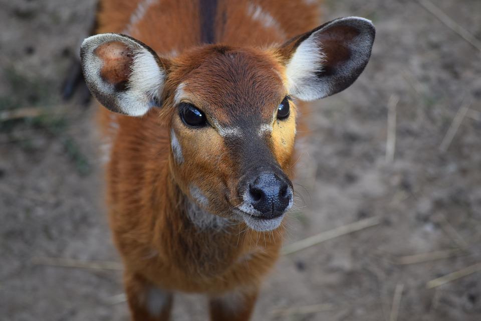 La fauna che arricchisce i nostri boschi