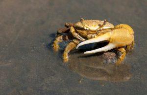 crab-79156__340